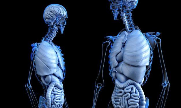 Embodiment, sé corporeo e sviluppo della consapevolezza di sé