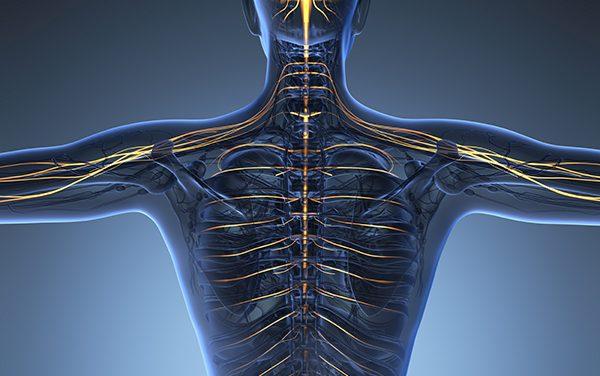 La psicoterapia corporea secondo il modello strutturale integrato