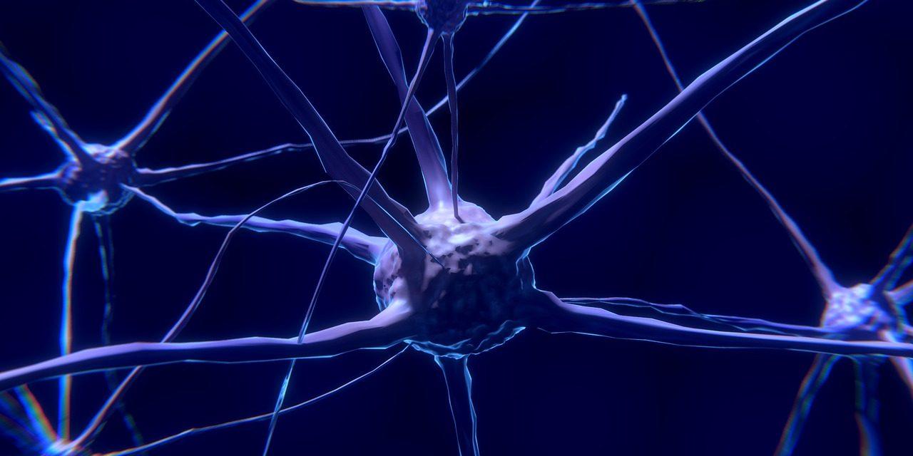 La neurofenomenologia